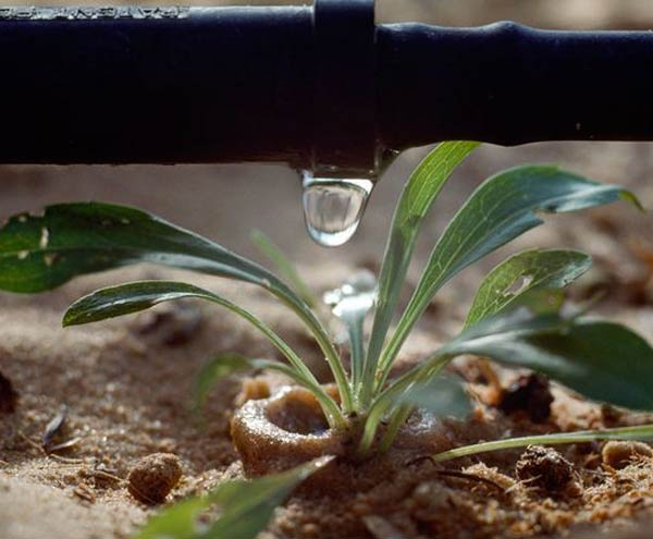 our team installed a drip irrigation system in Lakewood, Colorado