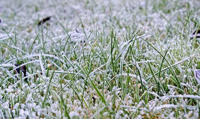 ice on grass