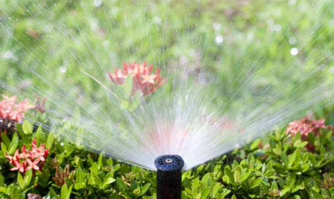 perfect irrigation after our team did a sprinkler repair in Wheat Ridge, CO