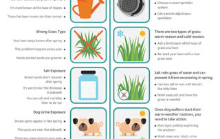 brown lawn infographic