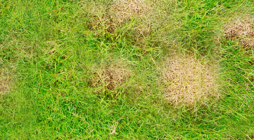brown spots in lawn