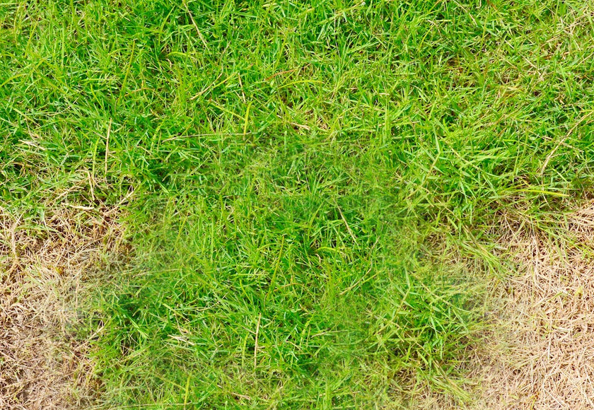 brown spots on lawn after fertilizing: what it means and what you should do